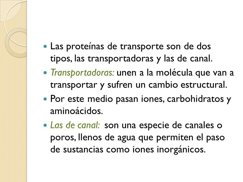 Las proteínas de transporte son de dos tipos, las transportadoras y las de canal.