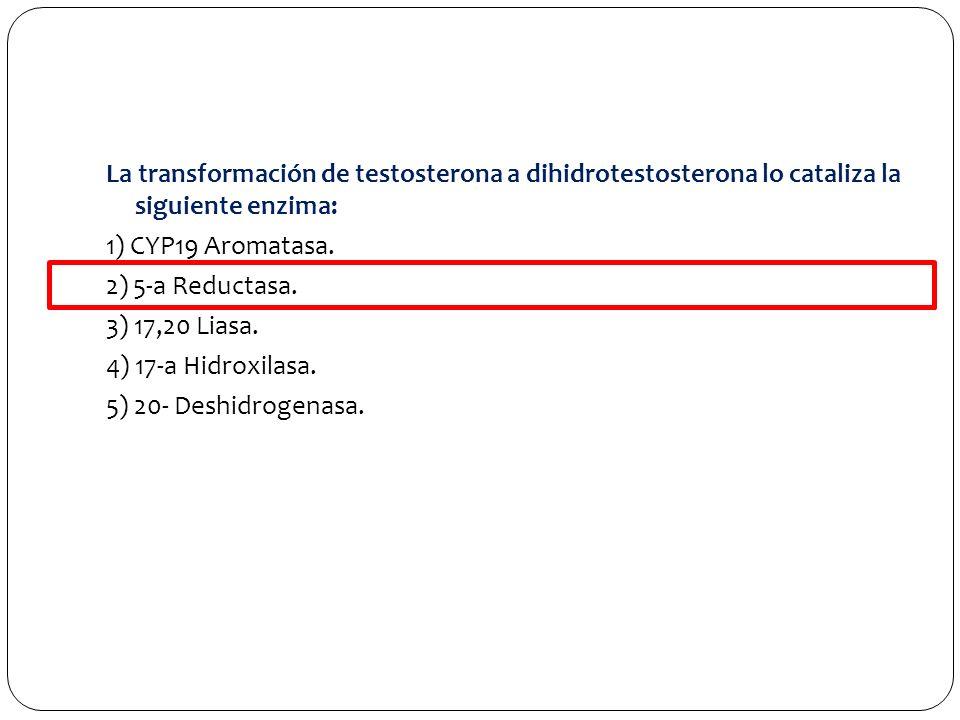 La transformación de testosterona a dihidrotestosterona lo cataliza la siguiente enzima: 1) CYP19 Aromatasa.