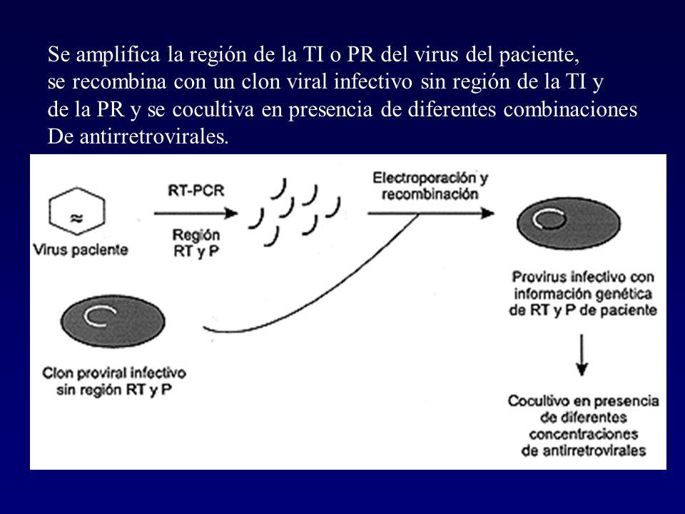 Se amplifica la región de la TI o PR del virus del paciente,