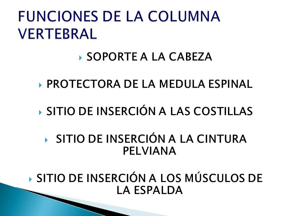 FUNCIONES DE LA COLUMNA VERTEBRAL