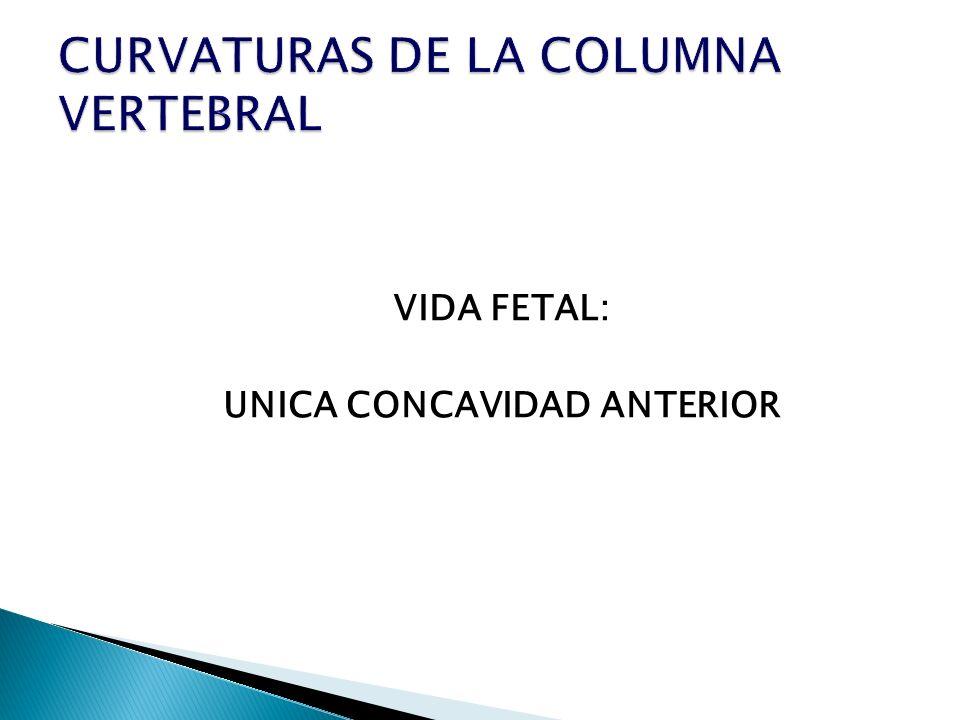 CURVATURAS DE LA COLUMNA VERTEBRAL
