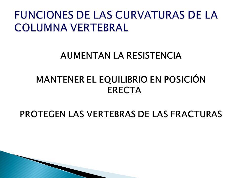 FUNCIONES DE LAS CURVATURAS DE LA COLUMNA VERTEBRAL