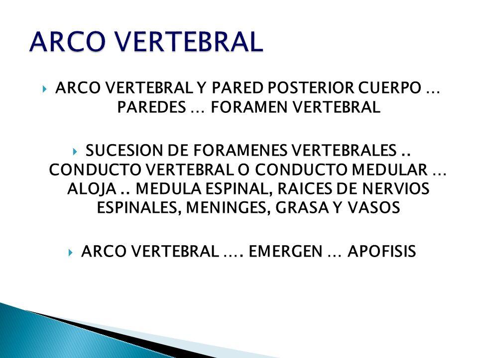 ARCO VERTEBRAL Y PARED POSTERIOR CUERPO … PAREDES … FORAMEN VERTEBRAL