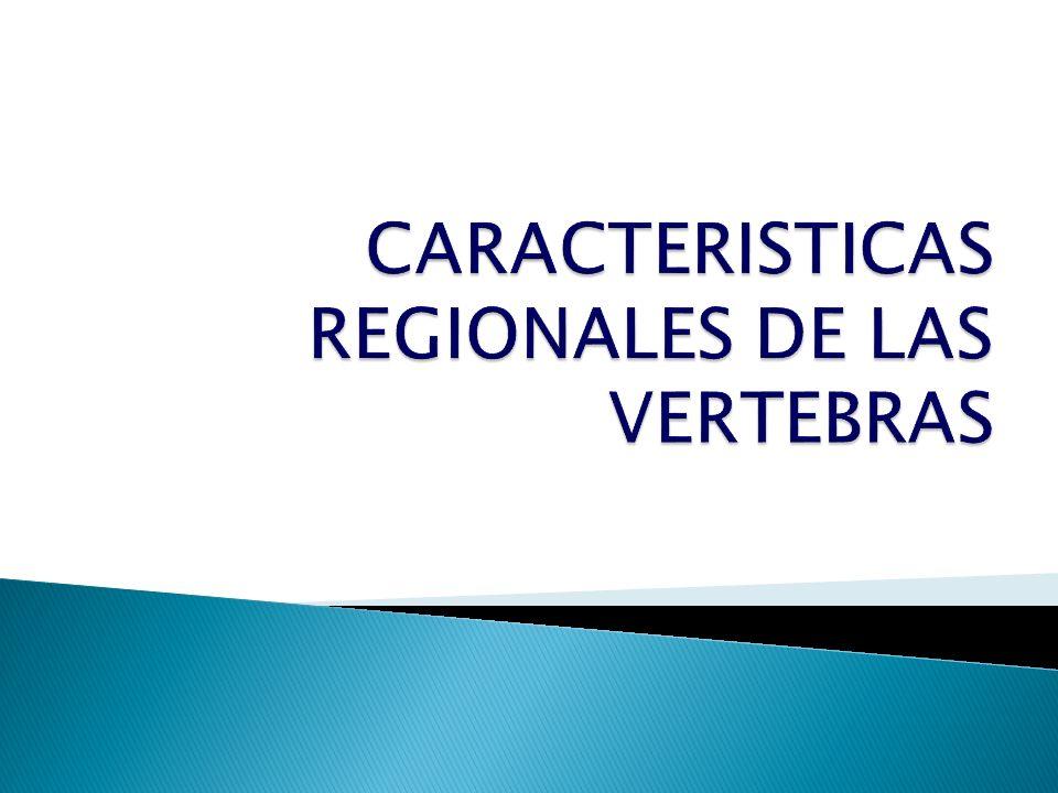 CARACTERISTICAS REGIONALES DE LAS VERTEBRAS