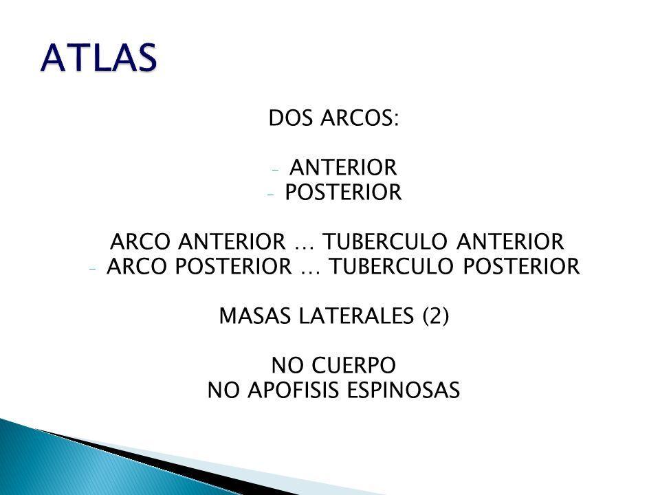 ATLAS DOS ARCOS: ANTERIOR POSTERIOR ARCO ANTERIOR … TUBERCULO ANTERIOR