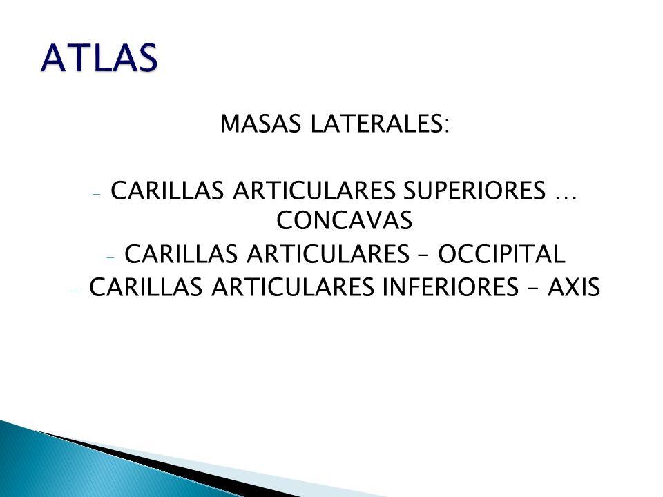 ATLAS MASAS LATERALES: CARILLAS ARTICULARES SUPERIORES … CONCAVAS