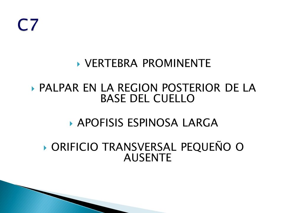 C7 VERTEBRA PROMINENTE. PALPAR EN LA REGION POSTERIOR DE LA BASE DEL CUELLO. APOFISIS ESPINOSA LARGA.