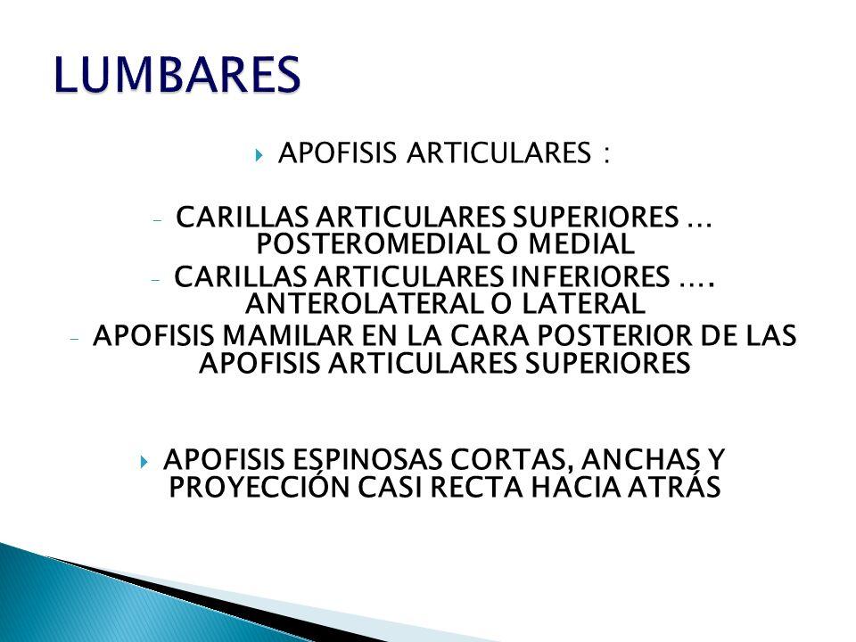 LUMBARES APOFISIS ARTICULARES :