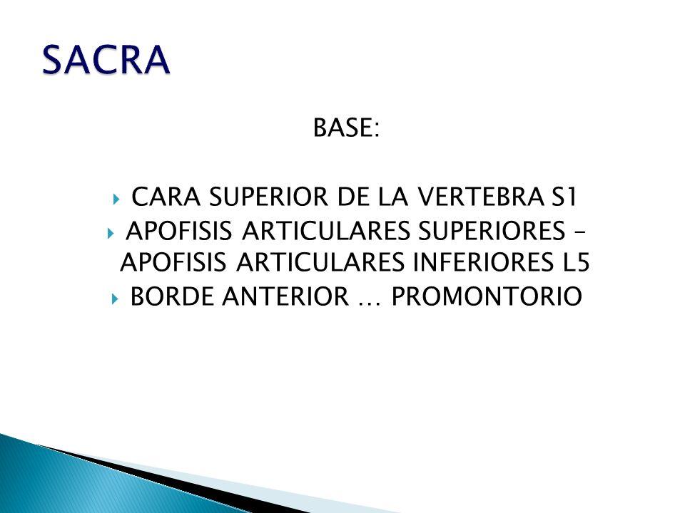 SACRA BASE: CARA SUPERIOR DE LA VERTEBRA S1