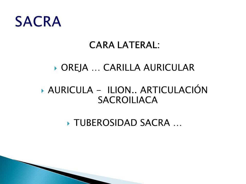 SACRA CARA LATERAL: OREJA … CARILLA AURICULAR