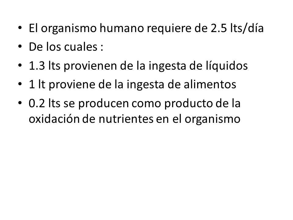El organismo humano requiere de 2.5 lts/día