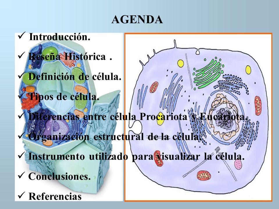 AGENDA Introducción. Reseña Histórica . Definición de célula.