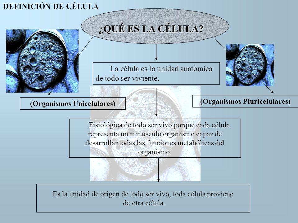 (Organismos Pluricelulares) (Organismos Unicelulares)