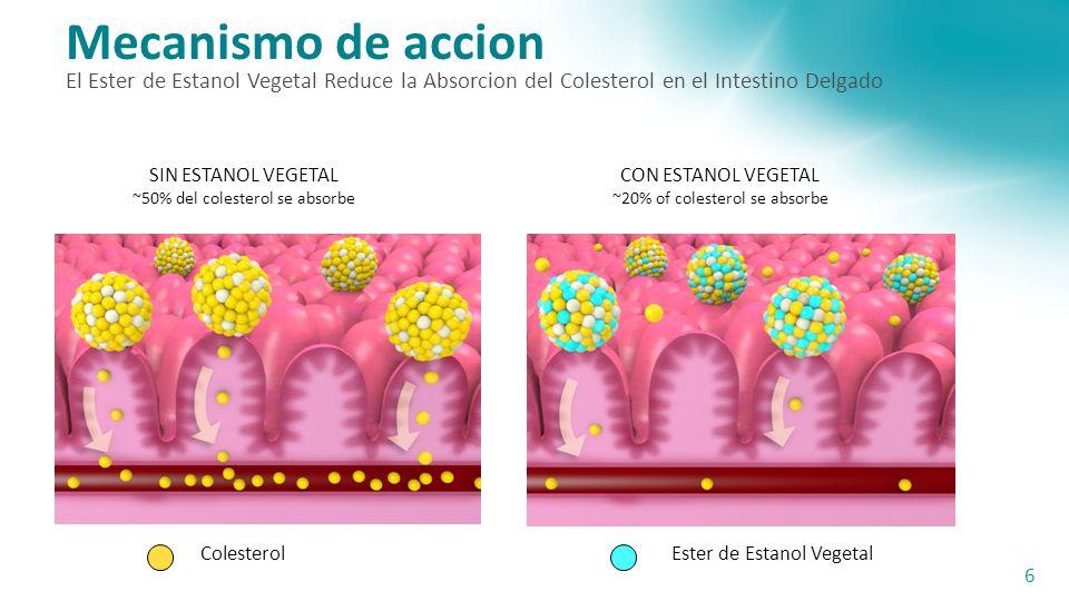 Mecanismo de accion El Ester de Estanol Vegetal Reduce la Absorcion del Colesterol en el Intestino Delgado.