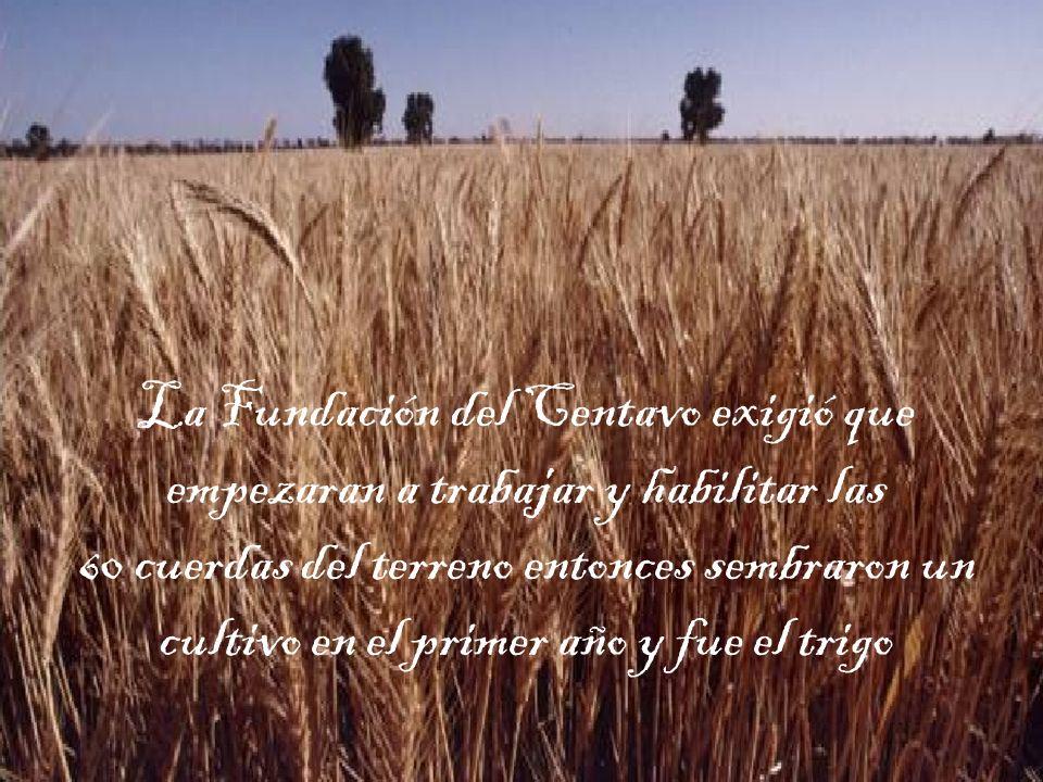 La Fundación del Centavo exigió que empezaran a trabajar y habilitar las 60 cuerdas del terreno entonces sembraron un cultivo en el primer año y fue el trigo