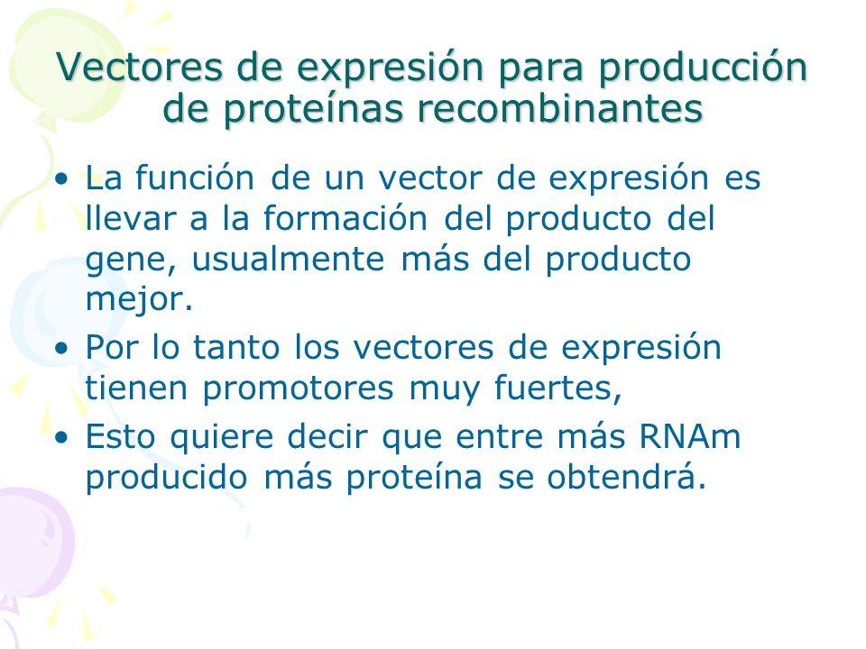 Vectores de expresión para producción de proteínas recombinantes