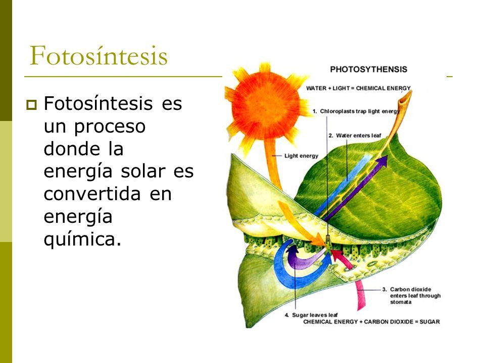 Las plantas en el proceso de la fotosintesis 97
