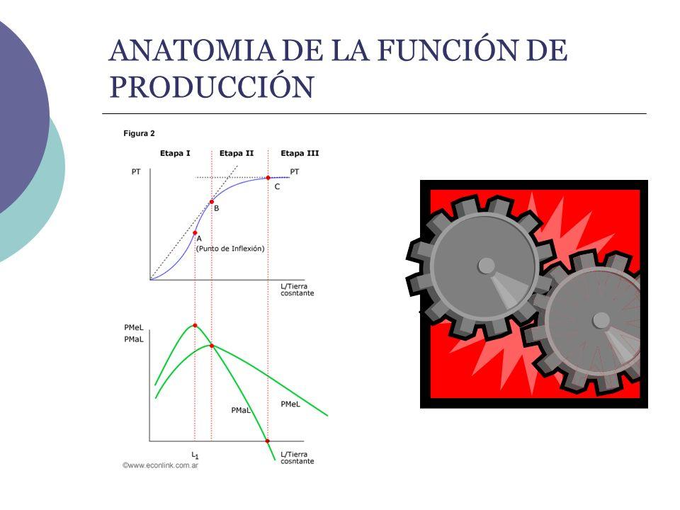 ANATOMIA DE LA FUNCIÓN DE PRODUCCIÓN