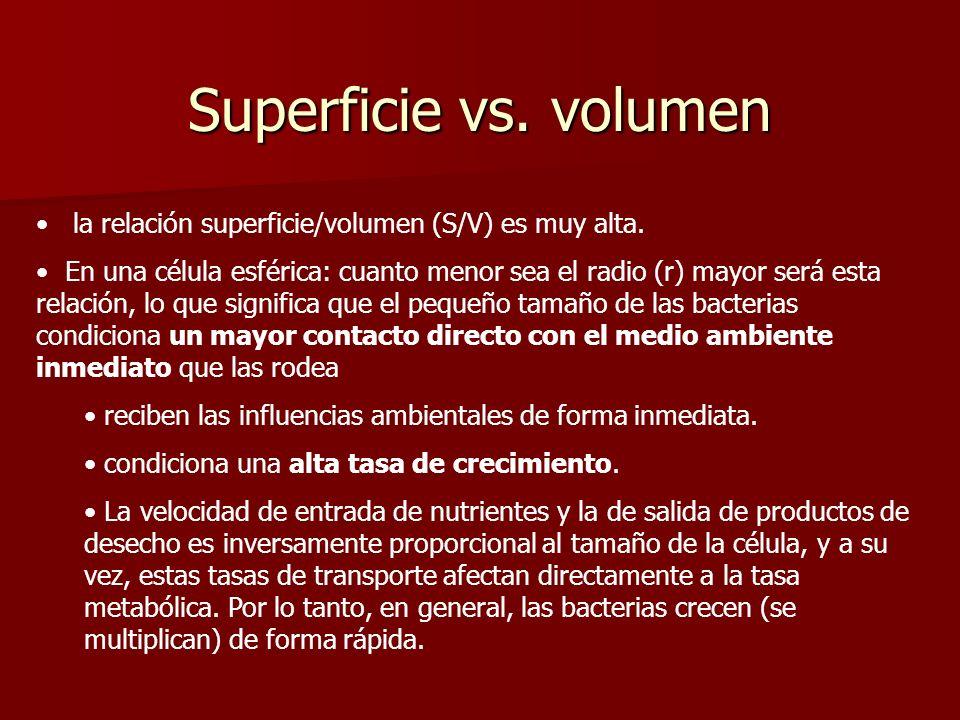 Superficie vs. volumen la relación superficie/volumen (S/V) es muy alta.