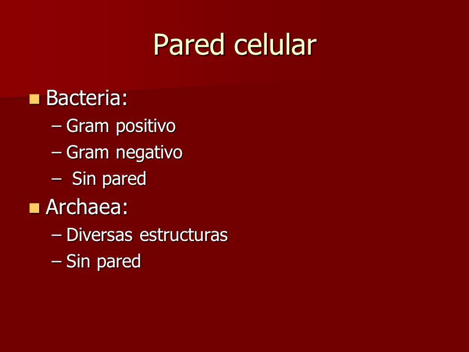 Pared celular Bacteria: Archaea: Gram positivo Gram negativo Sin pared