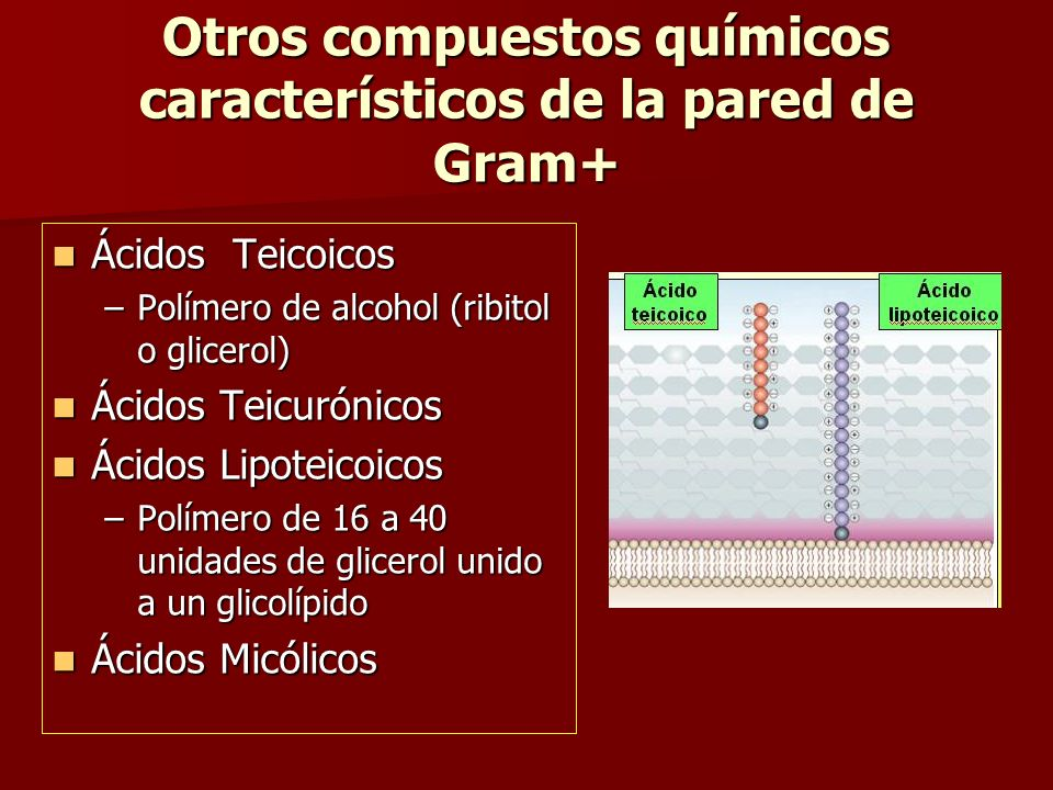 Otros compuestos químicos característicos de la pared de Gram+