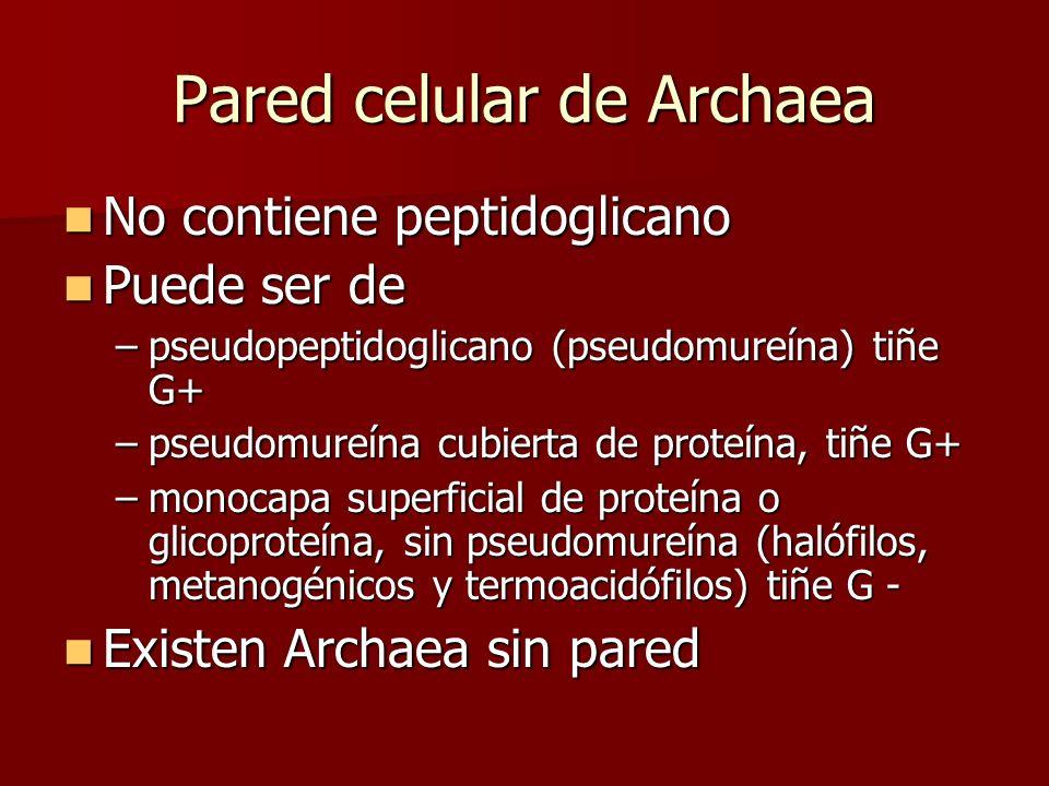 Pared celular de Archaea