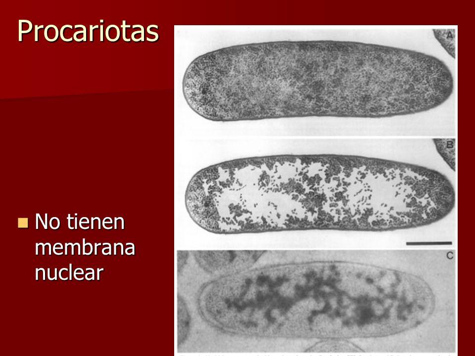 Procariotas No tienen membrana nuclear