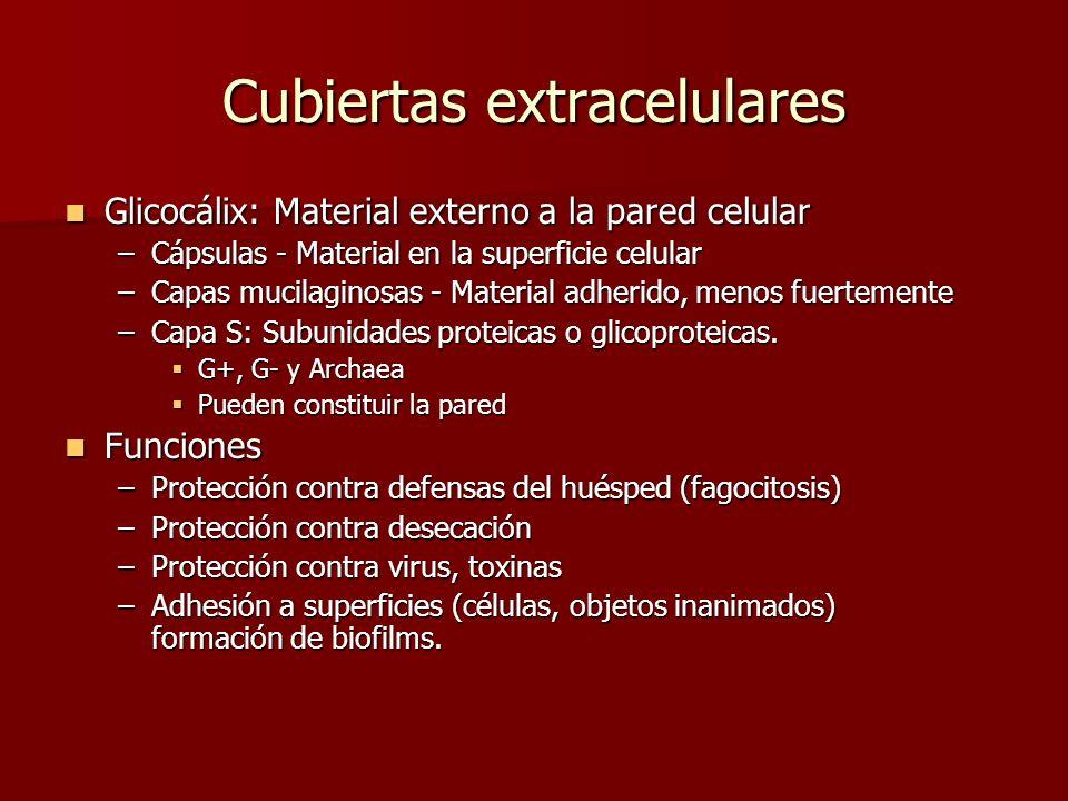 Cubiertas extracelulares