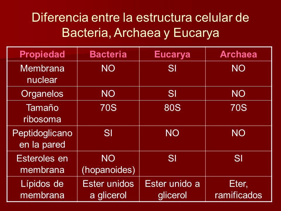 Diferencia entre la estructura celular de Bacteria, Archaea y Eucarya