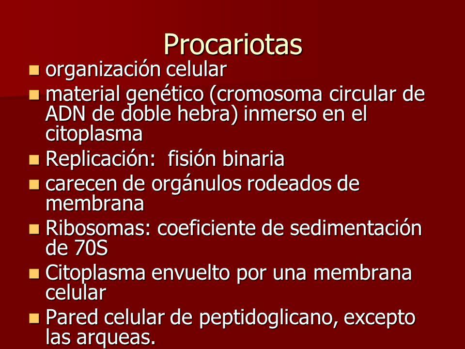 Procariotas organización celular
