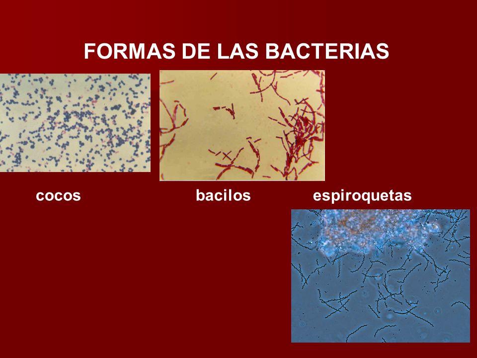 FORMAS DE LAS BACTERIAS