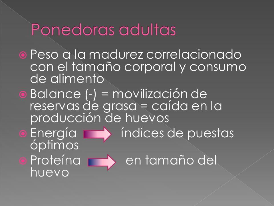 Peso a la madurez correlacionado con el tamaño corporal y consumo de alimento
