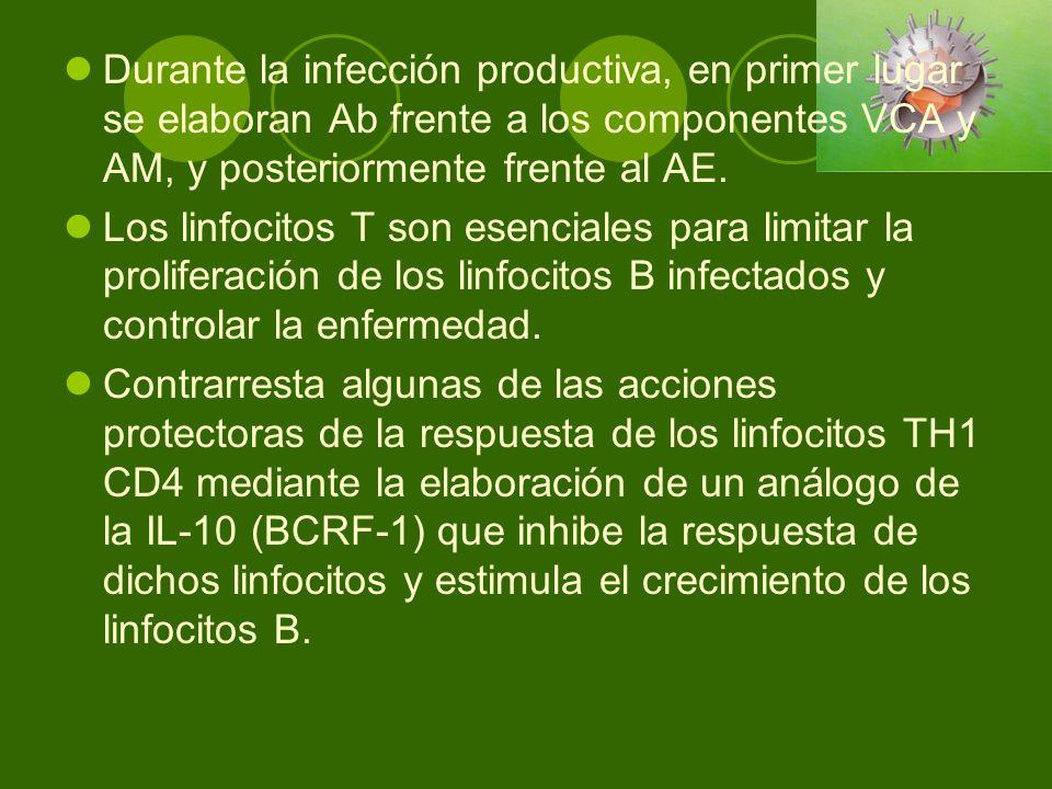 Durante la infección productiva, en primer lugar se elaboran Ab frente a los componentes VCA y AM, y posteriormente frente al AE.