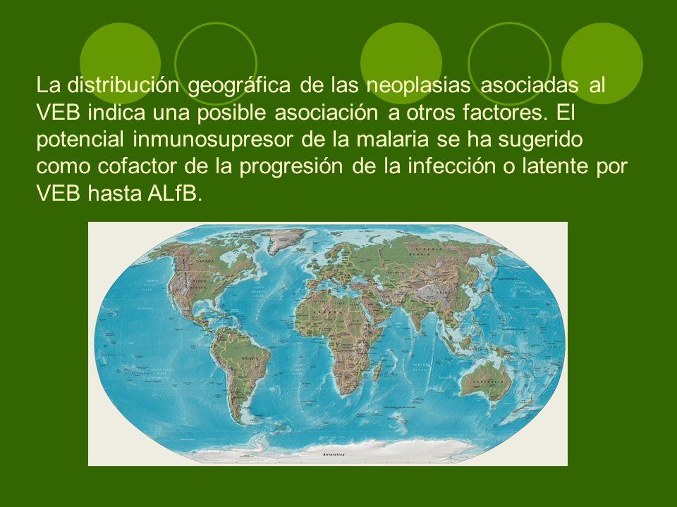 La distribución geográfica de las neoplasias asociadas al VEB indica una posible asociación a otros factores.