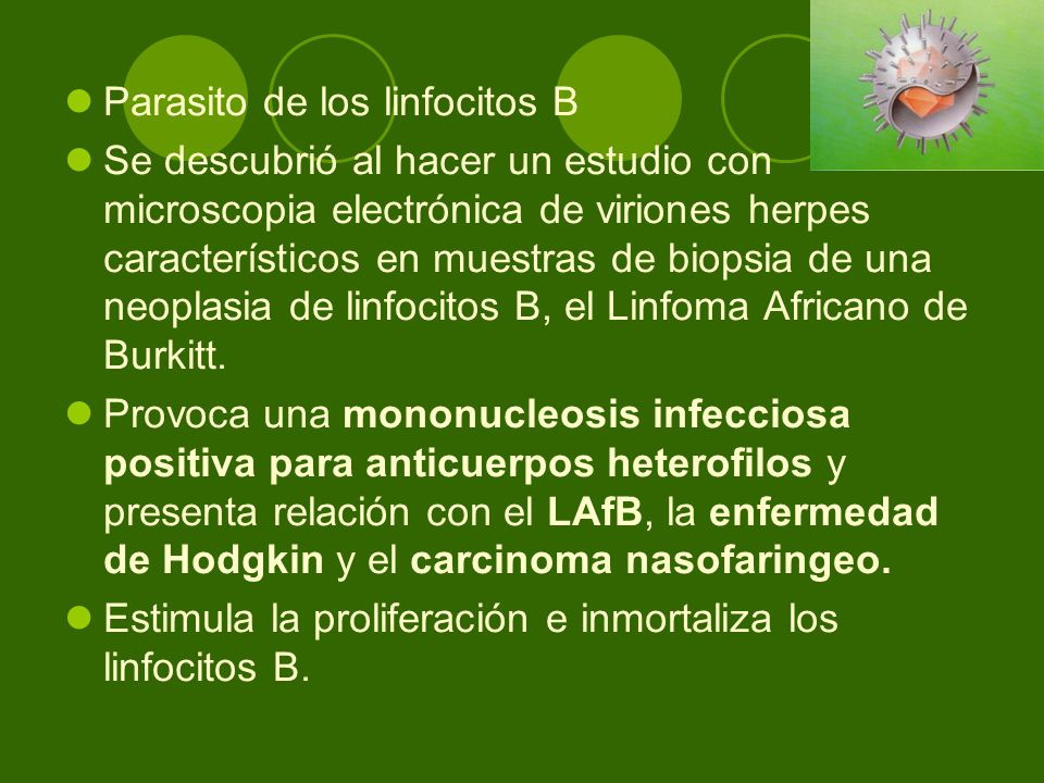 Parasito de los linfocitos B