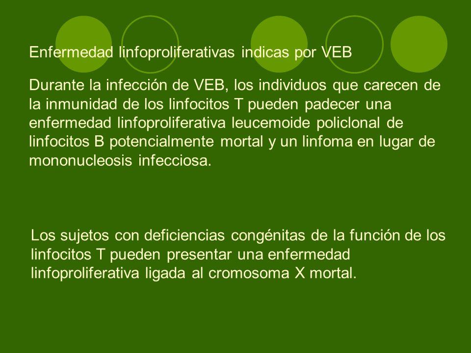 Enfermedad linfoproliferativas indicas por VEB