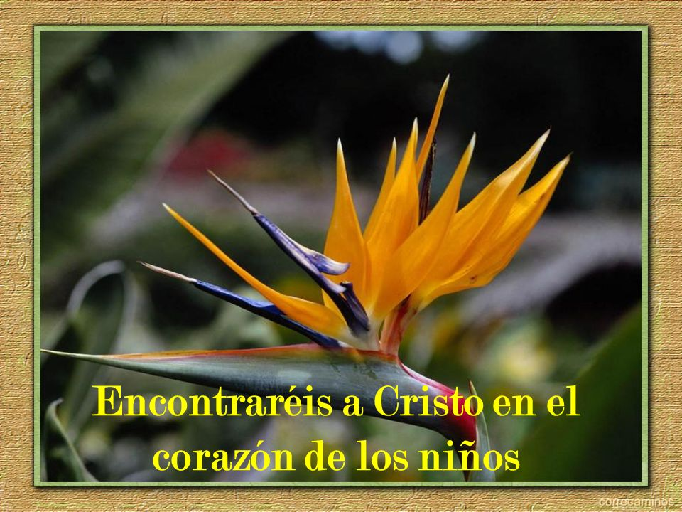 Encontraréis a Cristo en el corazón de los niños