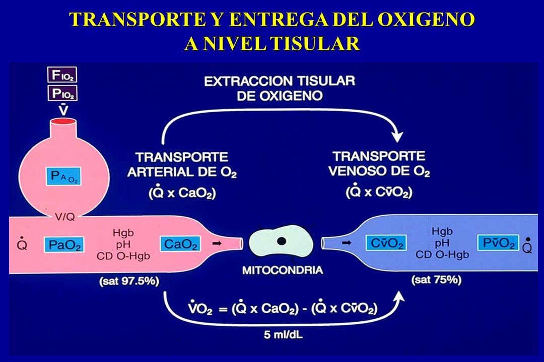 TRANSPORTE Y ENTREGA DEL OXIGENO A NIVEL TISULAR