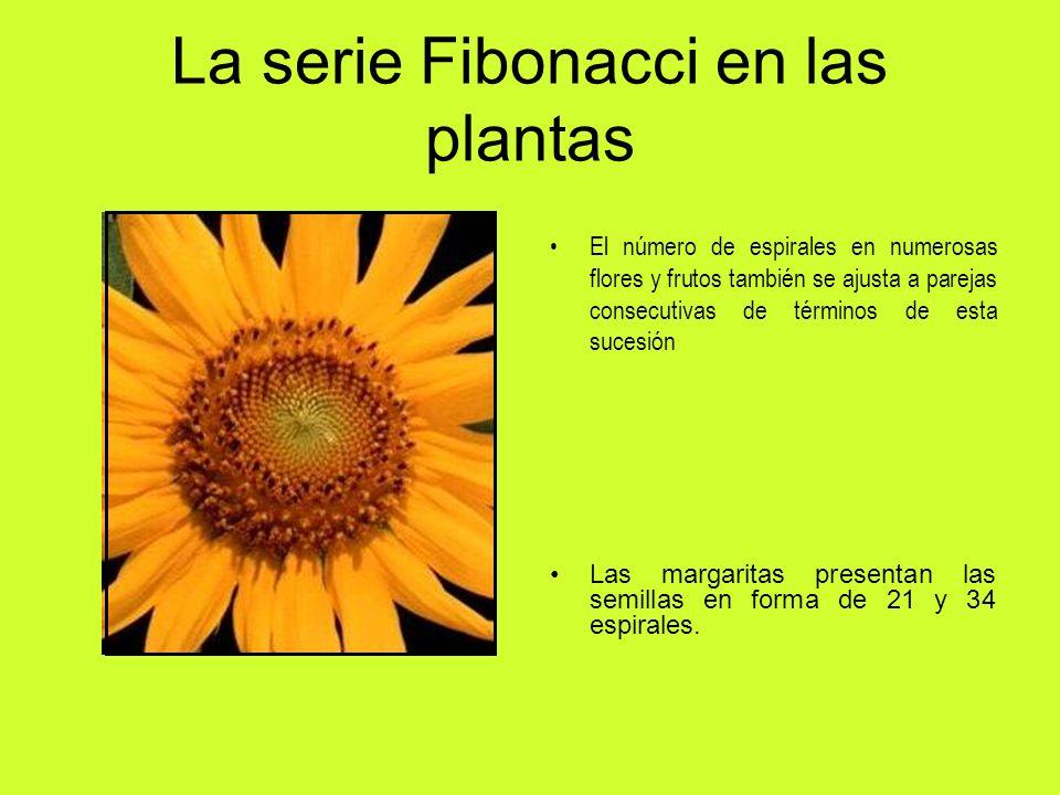 La serie Fibonacci en las plantas