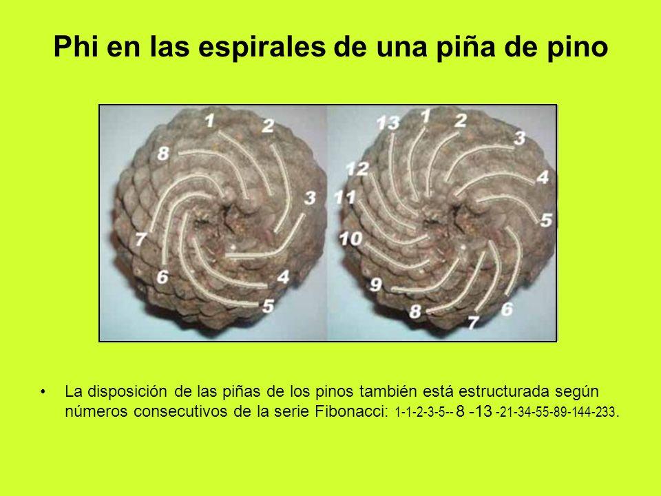Phi en las espirales de una piña de pino