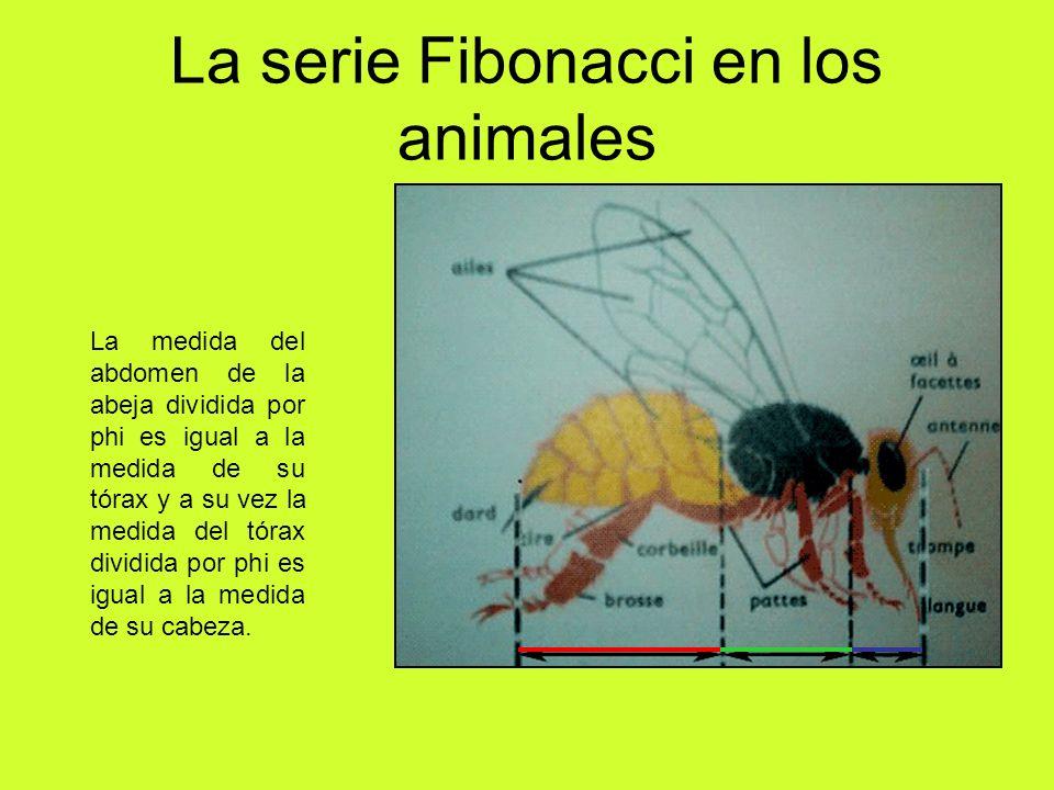 La serie Fibonacci en los animales