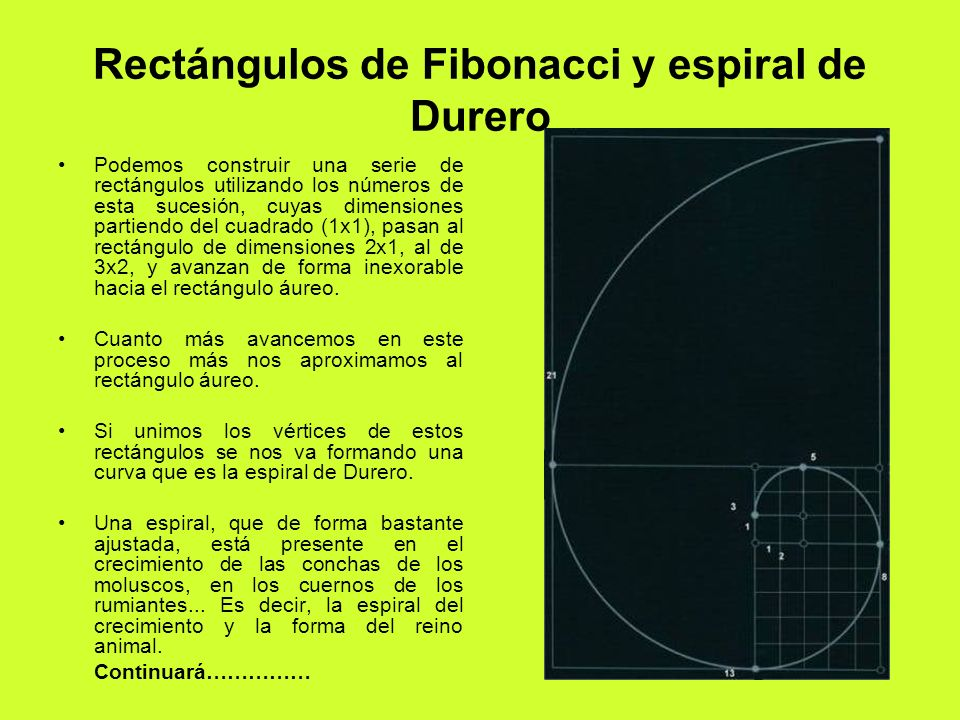 Rectángulos de Fibonacci y espiral de Durero