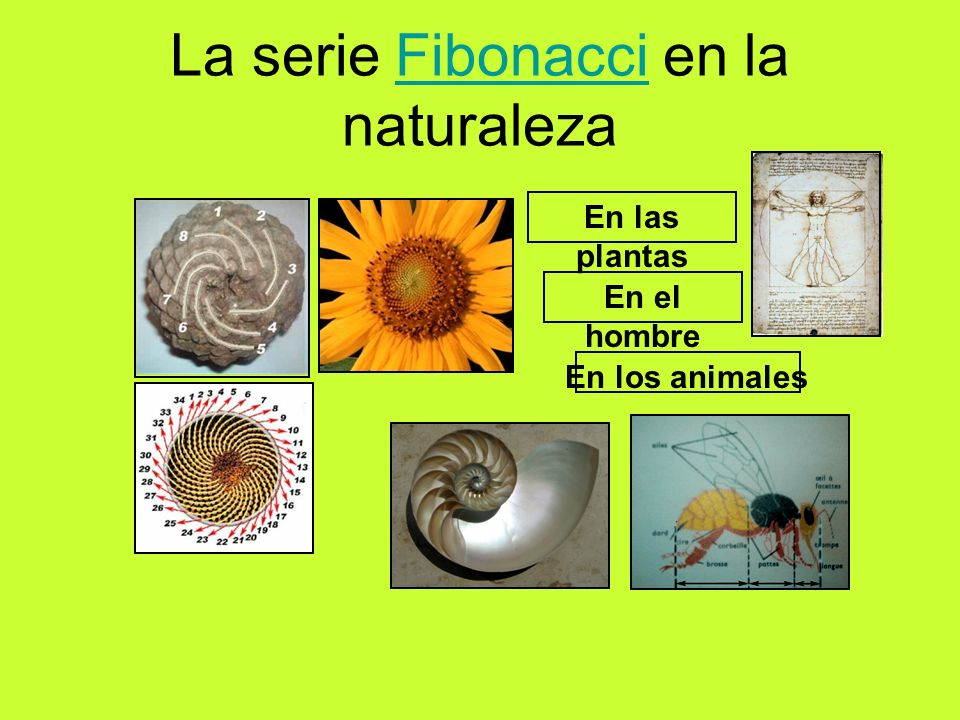 La serie Fibonacci en la naturaleza