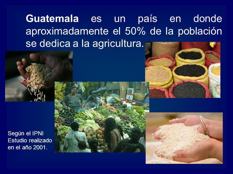 Guatemala es un país en donde aproximadamente el 50% de la población se dedica a la agricultura.