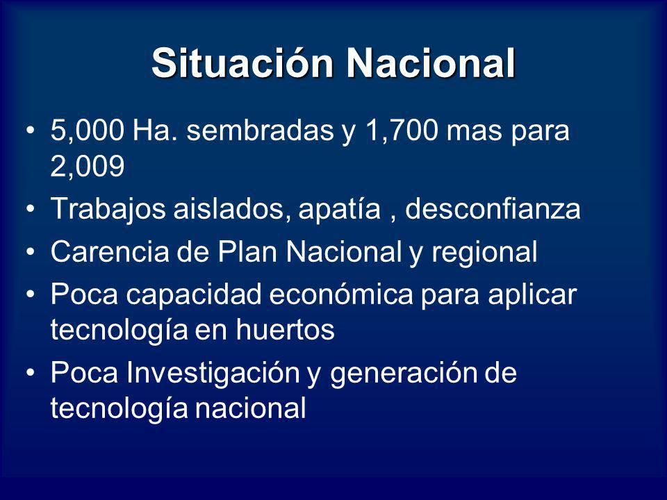 Situación Nacional 5,000 Ha. sembradas y 1,700 mas para 2,009