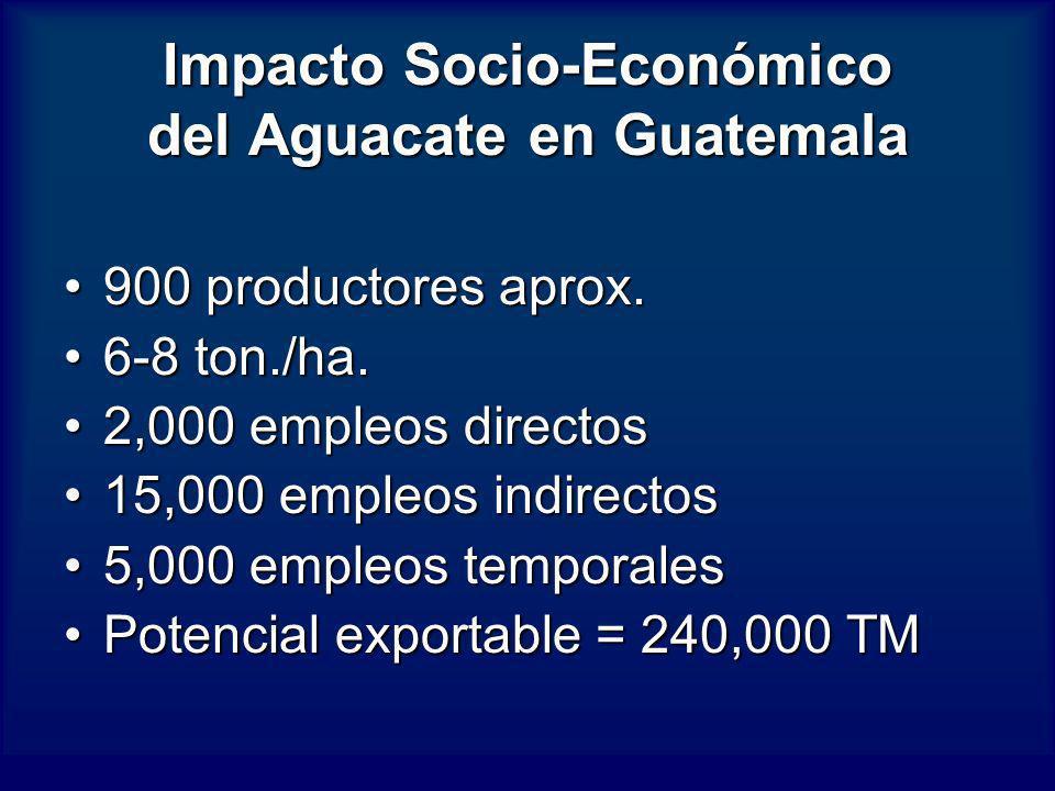 Impacto Socio-Económico del Aguacate en Guatemala