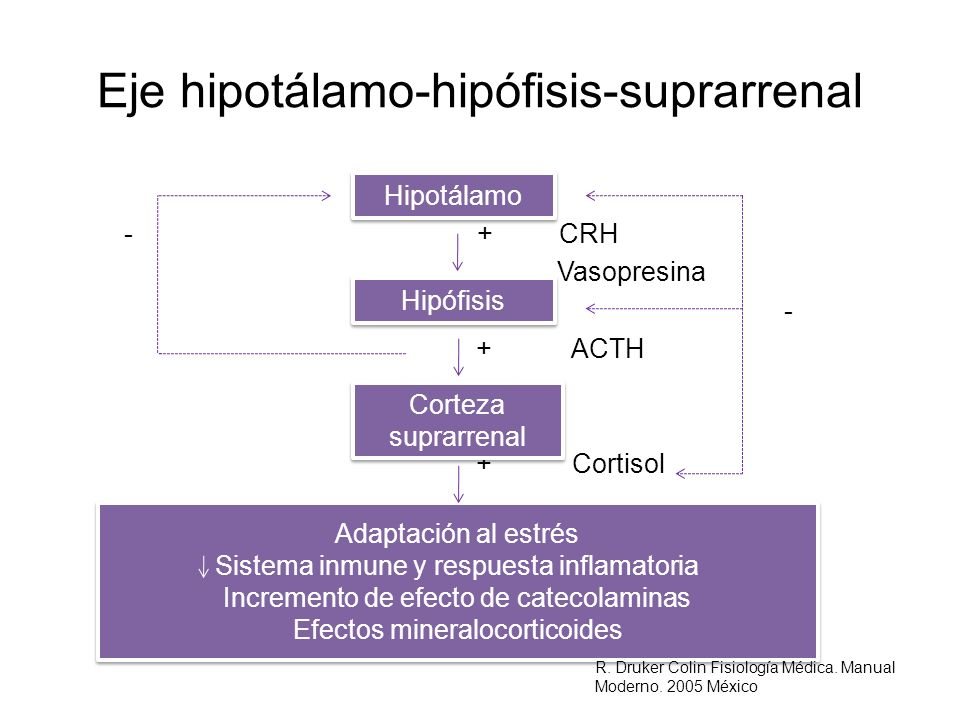 Eje hipotálamo-hipófisis-suprarrenal