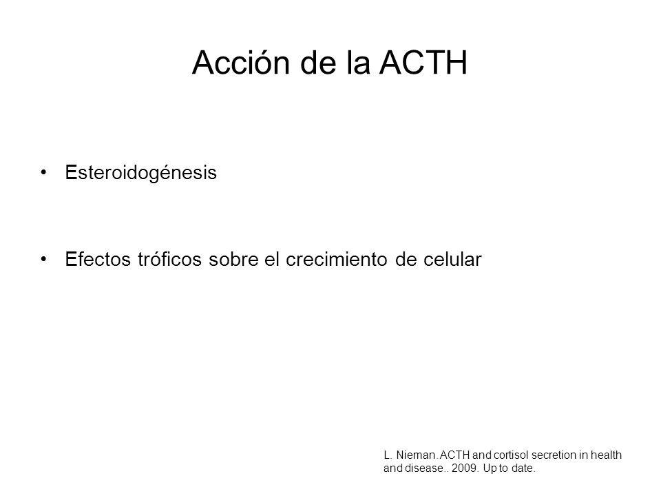 Acción de la ACTH Esteroidogénesis
