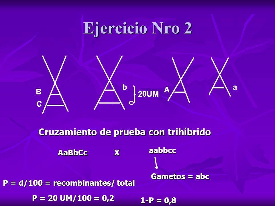 Ejercicio Nro 2 Cruzamiento de prueba con trihíbrido b a A B 20UM c C