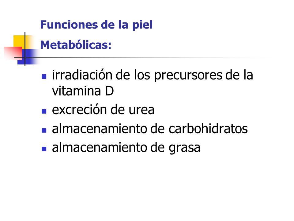Funciones de la piel Metabólicas: